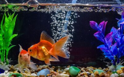 Easy Guide to Understand Nitrogen Cycle in Fish Tank for Your Aquarium