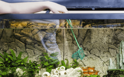 3 Important Tools Must Have to Aquarium Care and Clean