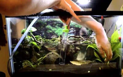 7 Steps How to Clean Blurry and Dirty Aquarium