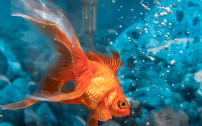4 Serious Problem When Maintaining Aquarium to Keep Clean