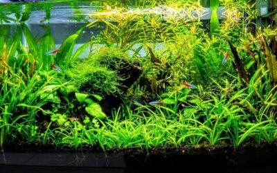 What is a Low-Tech Planted Aquarium
