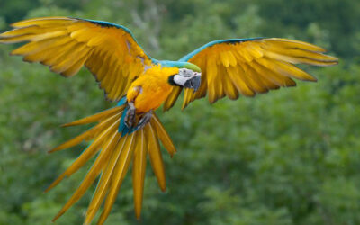19 Steps How to Train Blue and Gold Macaws Bird