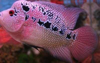 5 Types Most Common Cichlid Fish Diseases