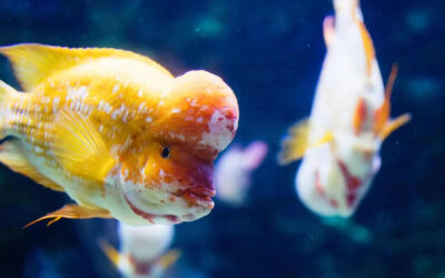 5 Ways to Conflict Management in Cichlid Fish Tank
